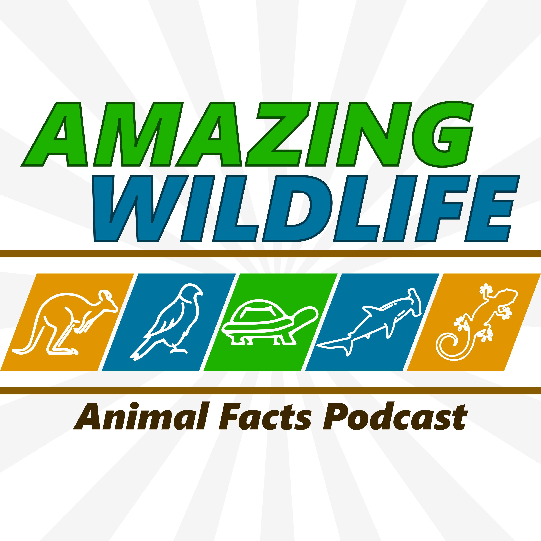 Amazing Wildlife podcast logo